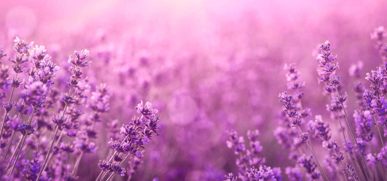 0083 lavender touch